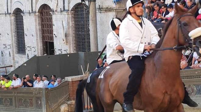 Cavalli estratti