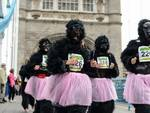 Gorillas Varese alla Great Gorilla Run di Londra