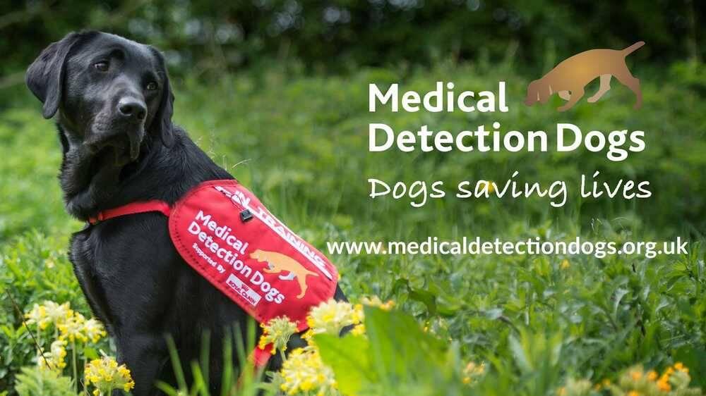 I cani potrebbero unirsi alla lotta contro COVID-19