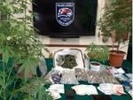 Sequestro Marijuana arresto Legnano Polizia Locale