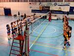 Volley Arluno